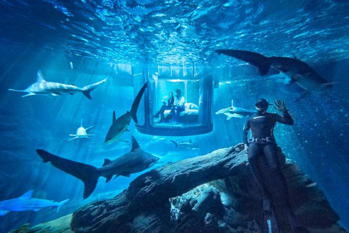 01-airbnb-leva-voce-para-se-hospedar-em-quarto-de-vidro-no-aquario-de-paris