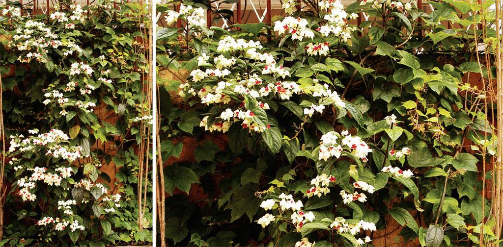 01-dicas-para-cultivar-plantas-em-casa