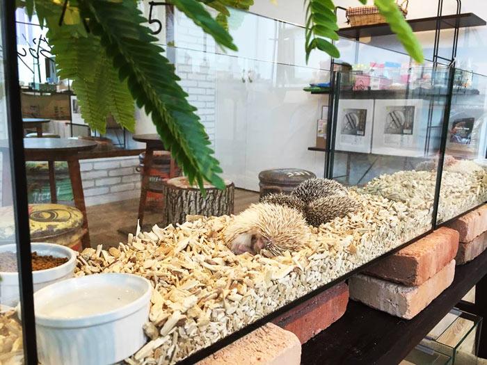 02-cafes-para-observar-animais-no-japao