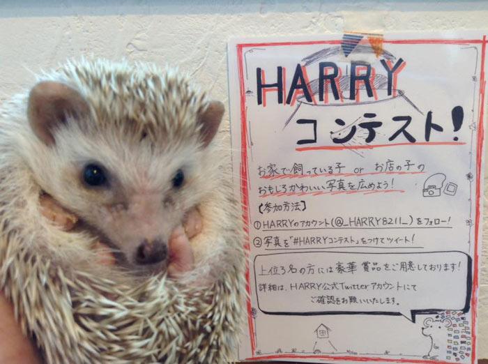 03-cafes-para-observar-animais-no-japao