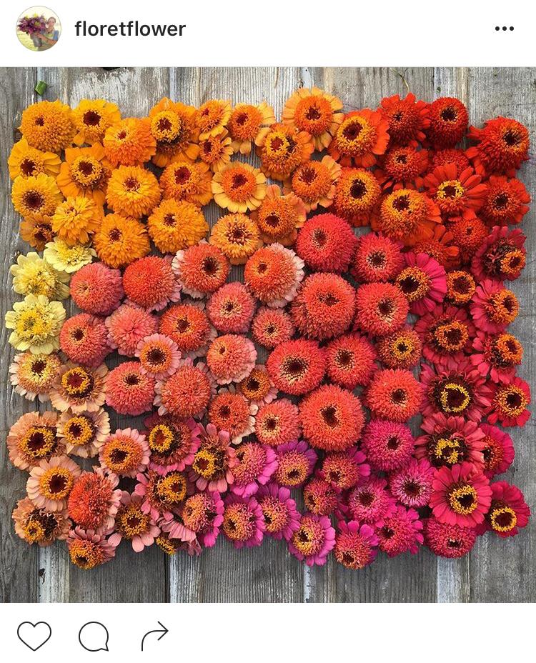 03-perfis-do-instagram-que-amam-flores-plantas-para-voce-seguir
