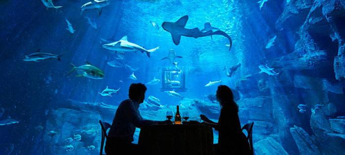 04-airbnb-leva-voce-para-se-hospedar-em-quarto-de-vidro-no-aquario-de-paris