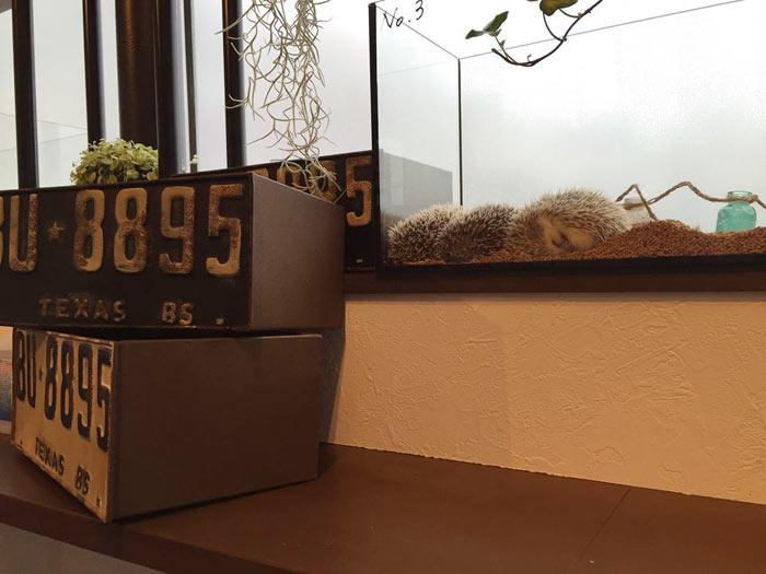 04-cafes-para-observar-animais-no-japao