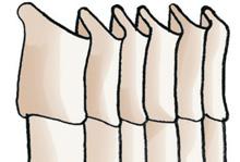 04-cortinas-glossario-termos-tecnicos