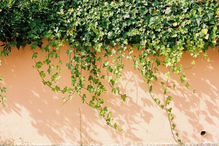 04-plantas-que-purificam-o-ar-segundo-a-nasa
