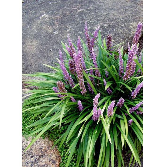 05-plantas-que-purificam-o-ar-segundo-a-nasa