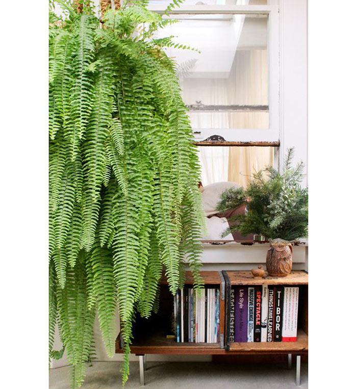 06-plantas-que-purificam-o-ar-segundo-a-nasa