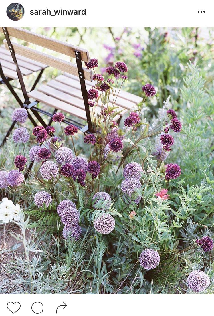 07-perfis-do-instagram-que-amam-flores-plantas-para-voce-seguir