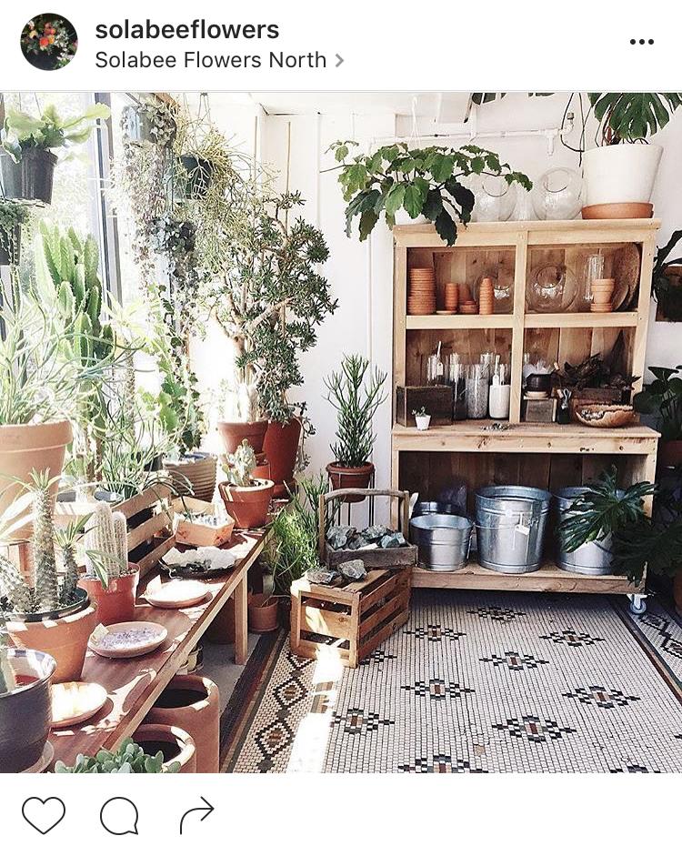 08-perfis-do-instagram-que-amam-flores-plantas-para-voce-seguir