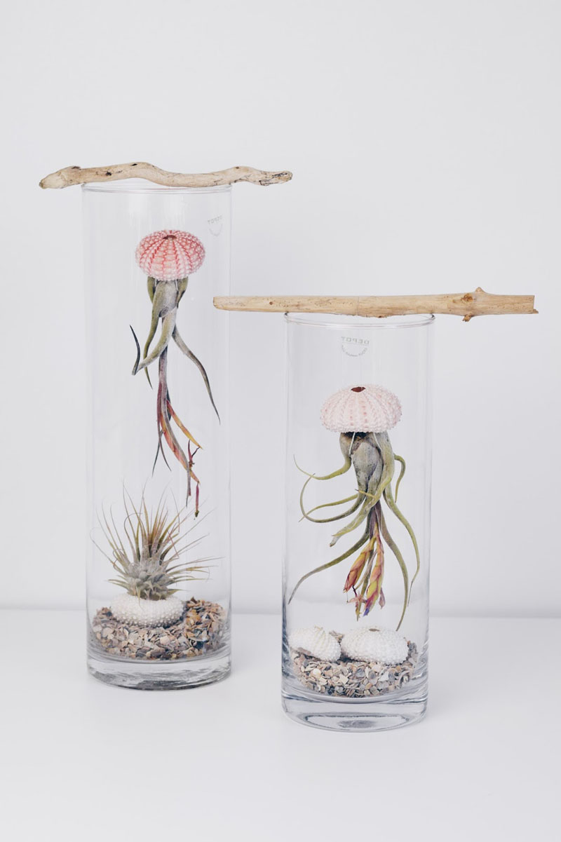 1-airplants-como-usar