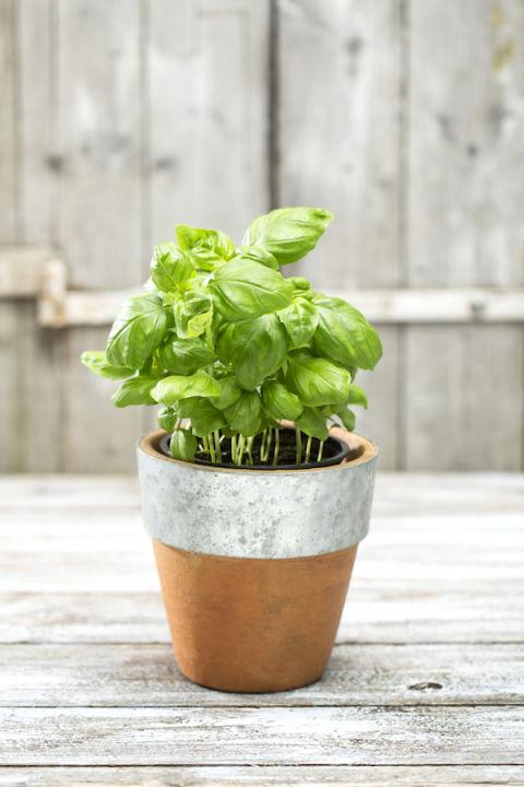 1-plantas-e-flores-que-vao-fazer-voce-se-sentir-mais-feliz-em-casa