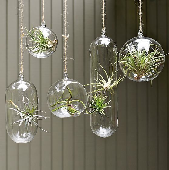 10-airplants-como-usar