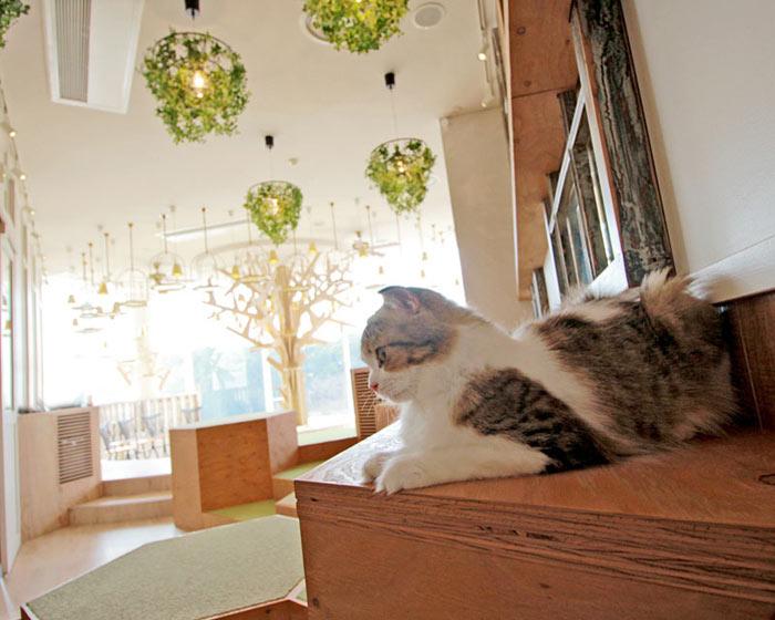 10-cafes-para-observar-animais-no-japao