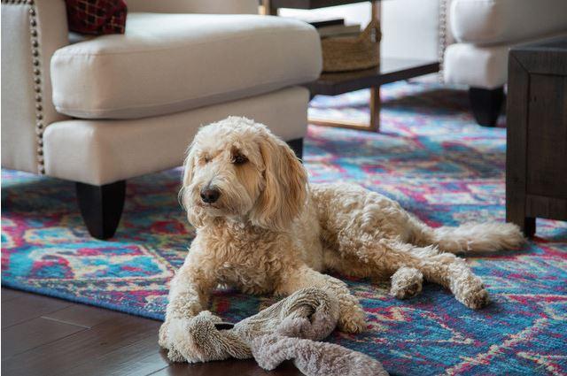 10-como-usar-tapetes-coloridos-na-decoracao-sem-medo