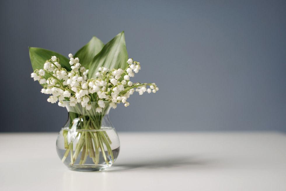 10-plantas-e-flores-que-vao-fazer-voce-se-sentir-mais-feliz-em-casa