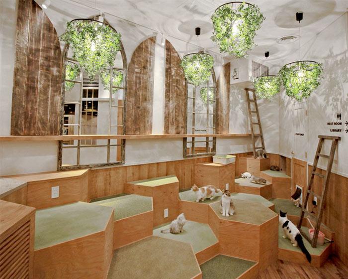 11-cafes-para-observar-animais-no-japao