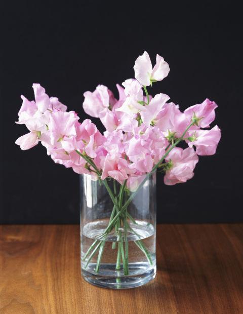 11-plantas-e-flores-que-vao-fazer-voce-se-sentir-mais-feliz-em-casa