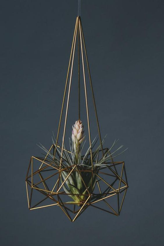 13-airplants-como-usar