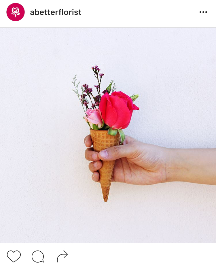 15-perfis-do-instagram-que-amam-flores-plantas-para-voce-seguir