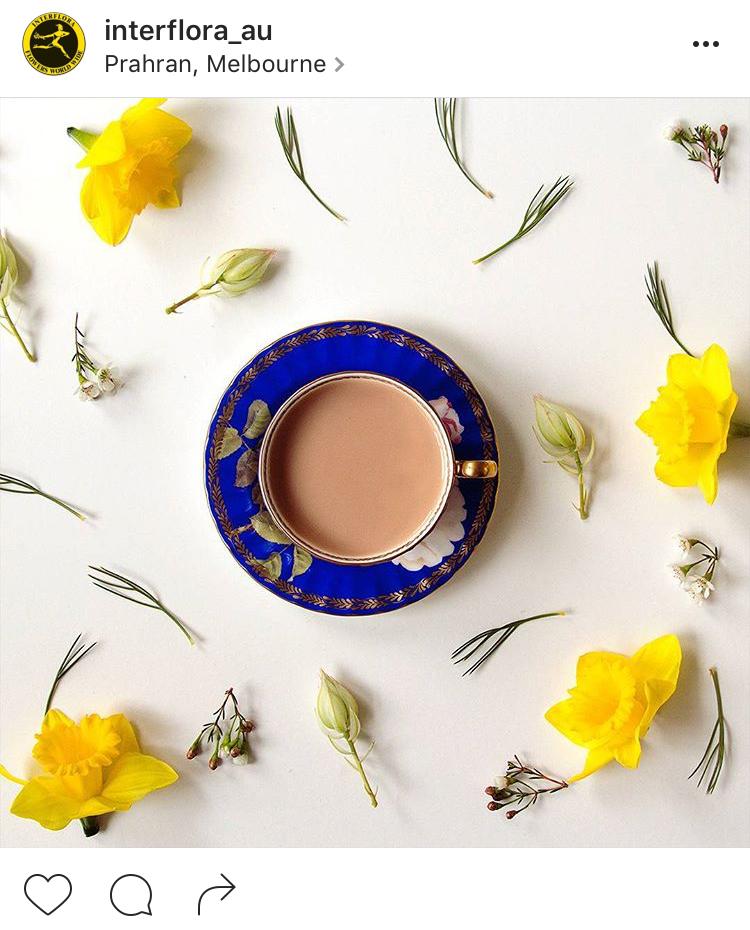 16-perfis-do-instagram-que-amam-flores-plantas-para-voce-seguir