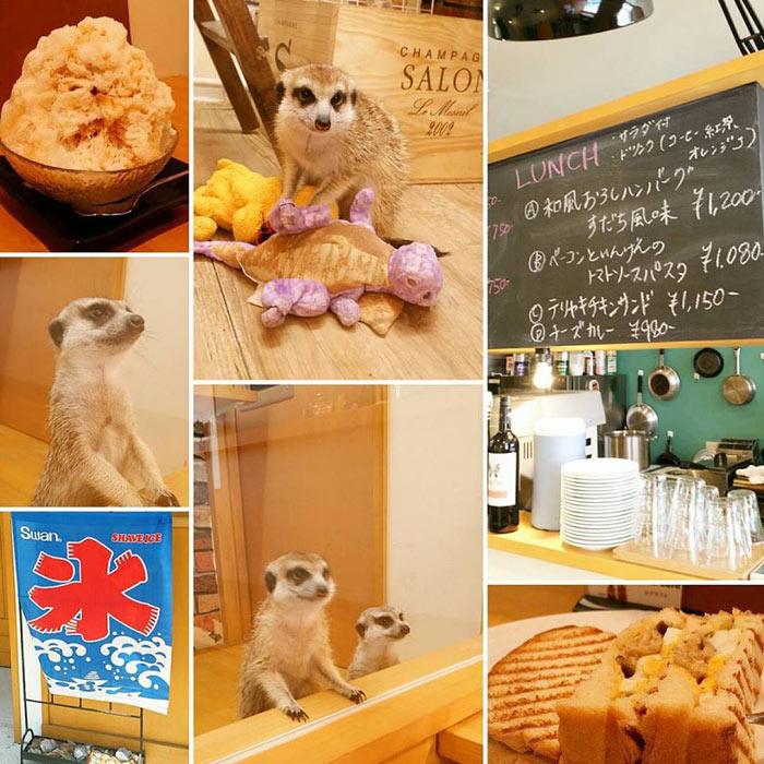 18-cafes-para-observar-animais-no-japao