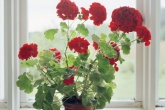 2-plantas-e-flores-que-vao-fazer-voce-se-sentir-mais-feliz-em-casa