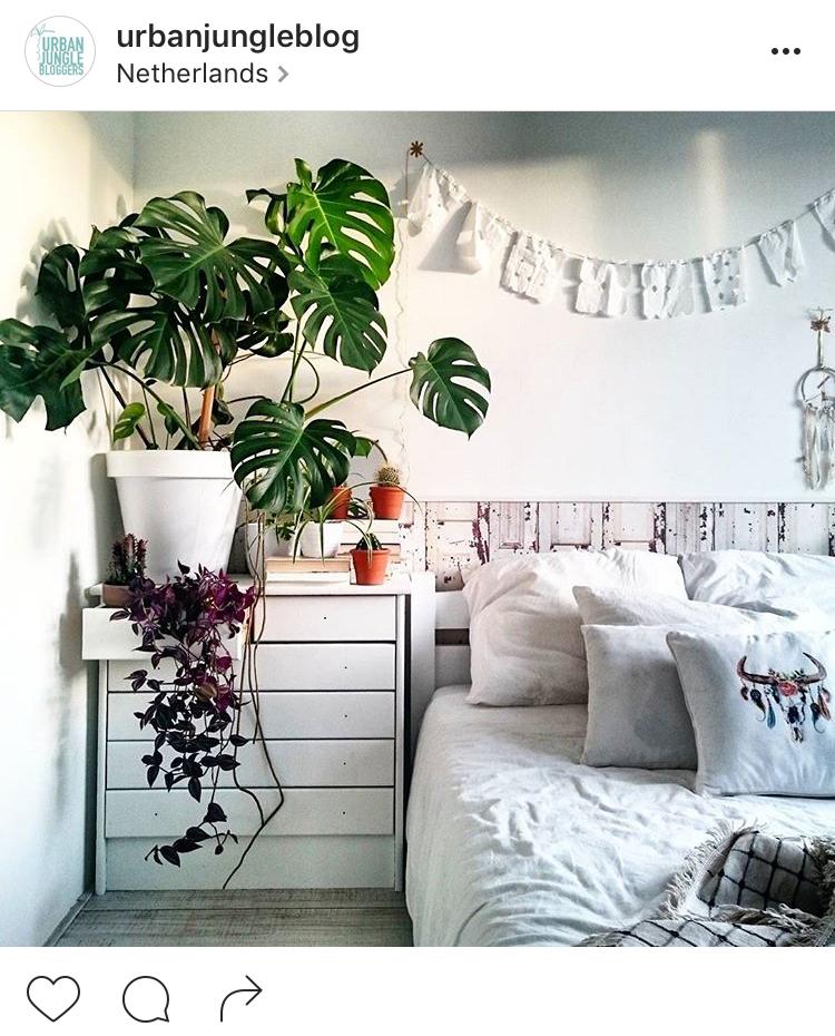 22-perfis-do-instagram-que-amam-flores-plantas-para-voce-seguir