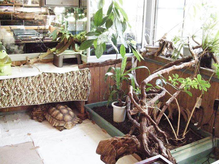 25-cafes-para-observar-animais-no-japao