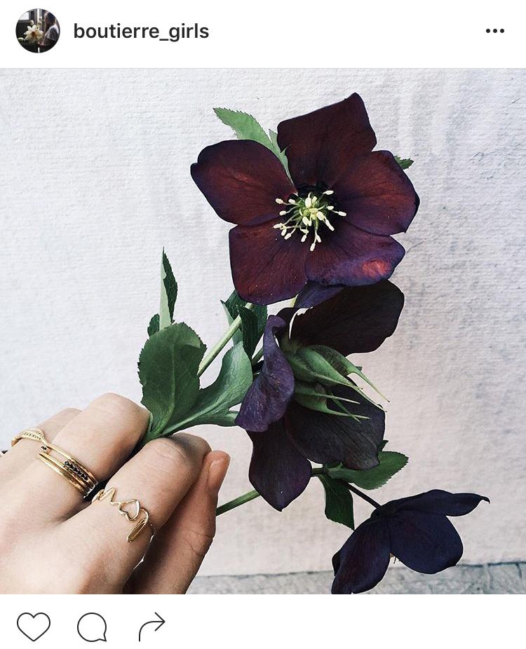 25-perfis-do-instagram-que-amam-flores-plantas-para-voce-seguir