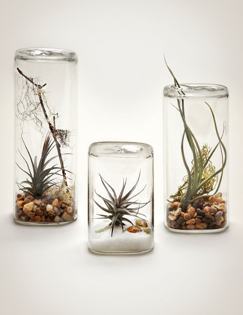 3-airplants-como-usar