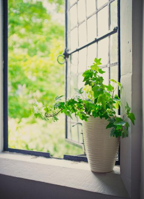 3-plantas-e-flores-que-vao-fazer-voce-se-sentir-mais-feliz-em-casa