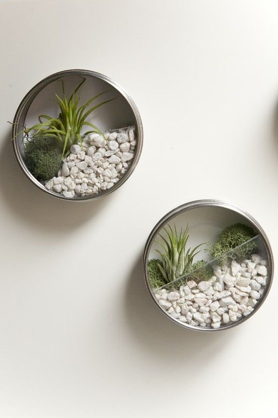 4-airplants-como-usar