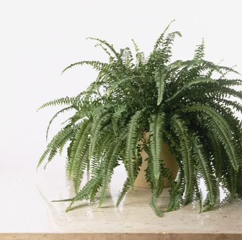 4-plantas-e-flores-que-vao-fazer-voce-se-sentir-mais-feliz-em-casa