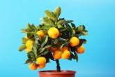 5-plantas-para-ter-no-quarto-que-ajudam-a-combater-a-insonia