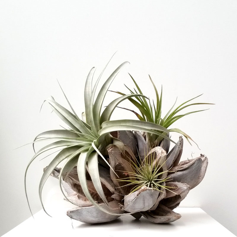 6-airplants-como-usar