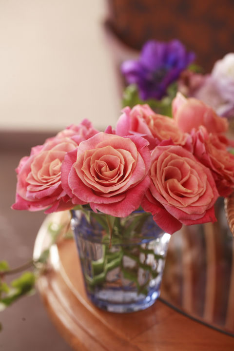 6-plantas-e-flores-que-vao-fazer-voce-se-sentir-mais-feliz-em-casa