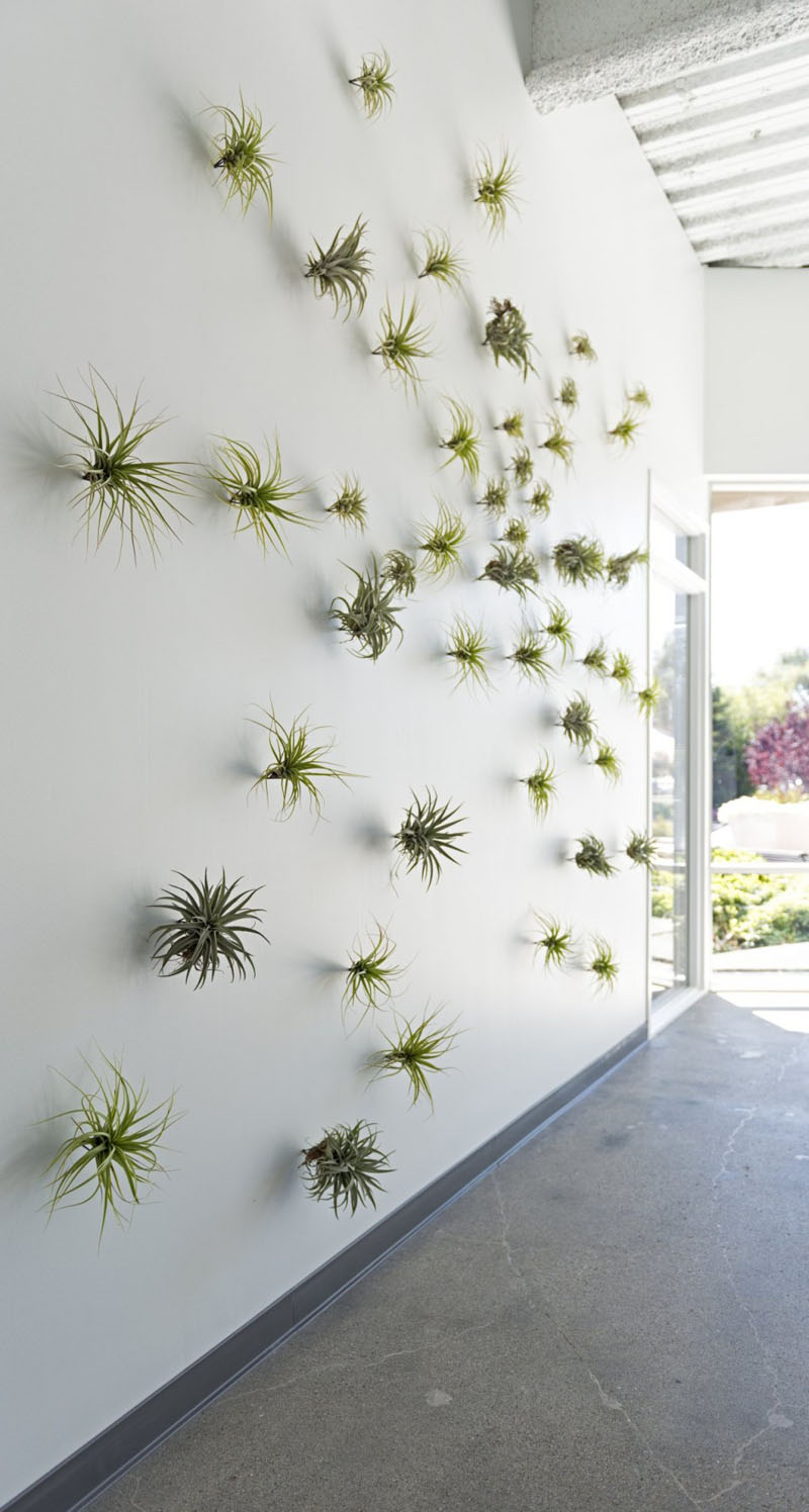 8-airplants-como-usar