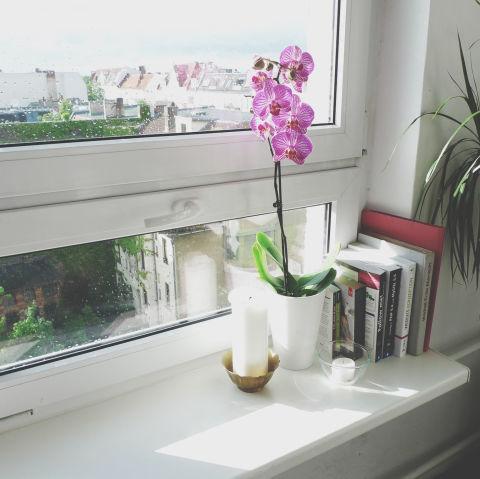 8-plantas-e-flores-que-vao-fazer-voce-se-sentir-mais-feliz-em-casa