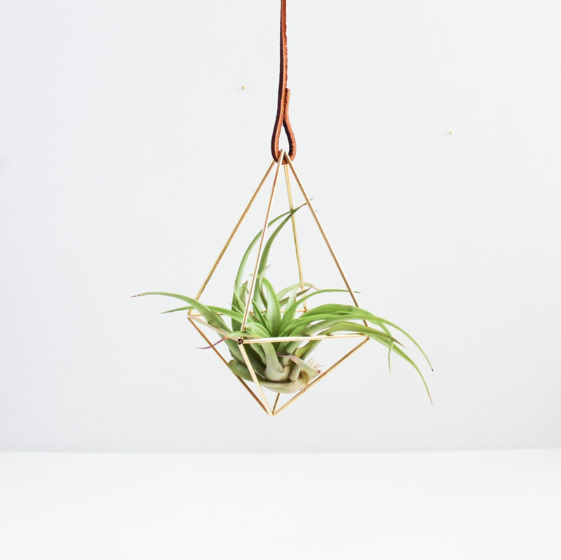9-airplants-como-usar