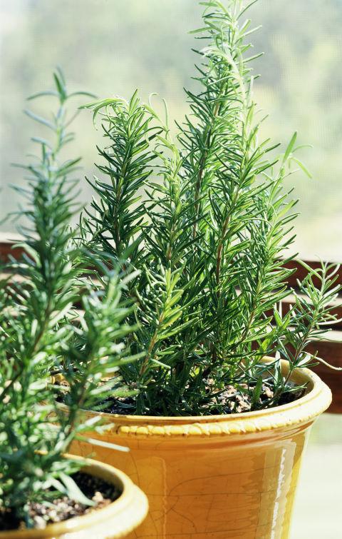 9-plantas-e-flores-que-vao-fazer-voce-se-sentir-mais-feliz-em-casa