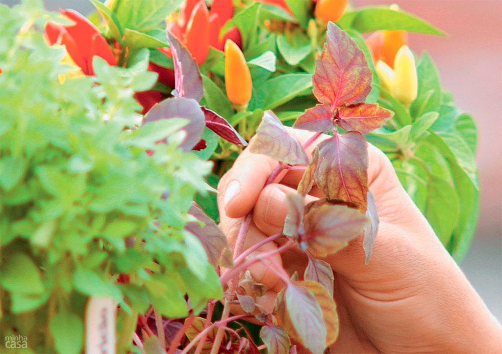 abre-ervas-para-cultivar-em-casa-e-usar-como-tempero