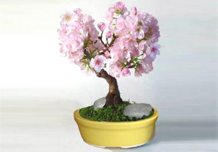 06-plantas-para-ter-no-quarto-que-ajudam-a-combater-a-insonia