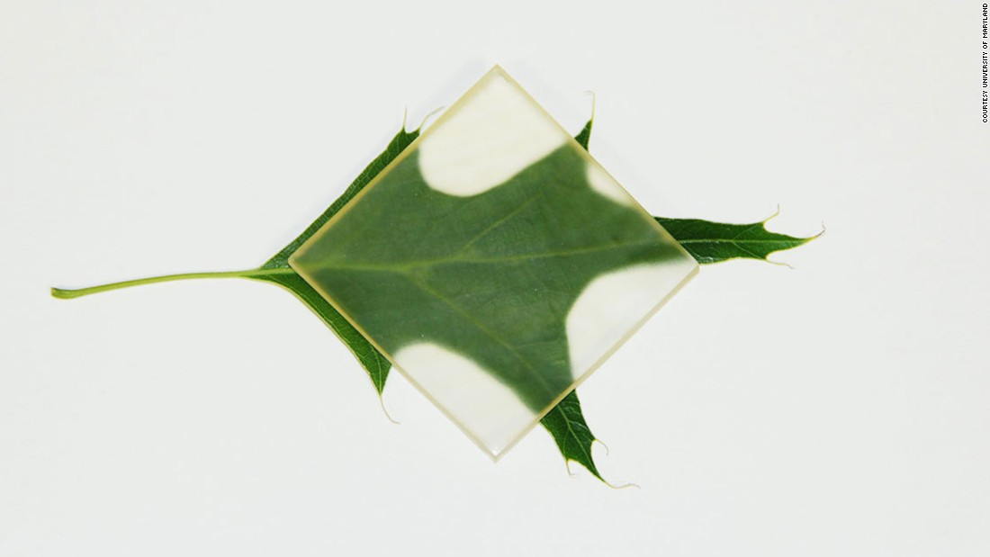 madeira-transparente-abre