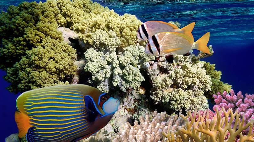 estes-sao-os-4-melhores-lugares-do-mundo-para-mergulhar04