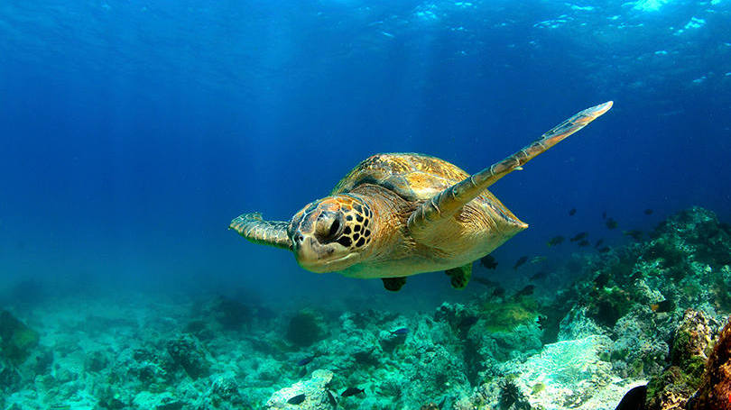 estes-sao-os-4-melhores-lugares-do-mundo-para-mergulhar05