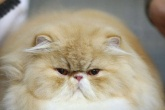 Gato---Getty-Images