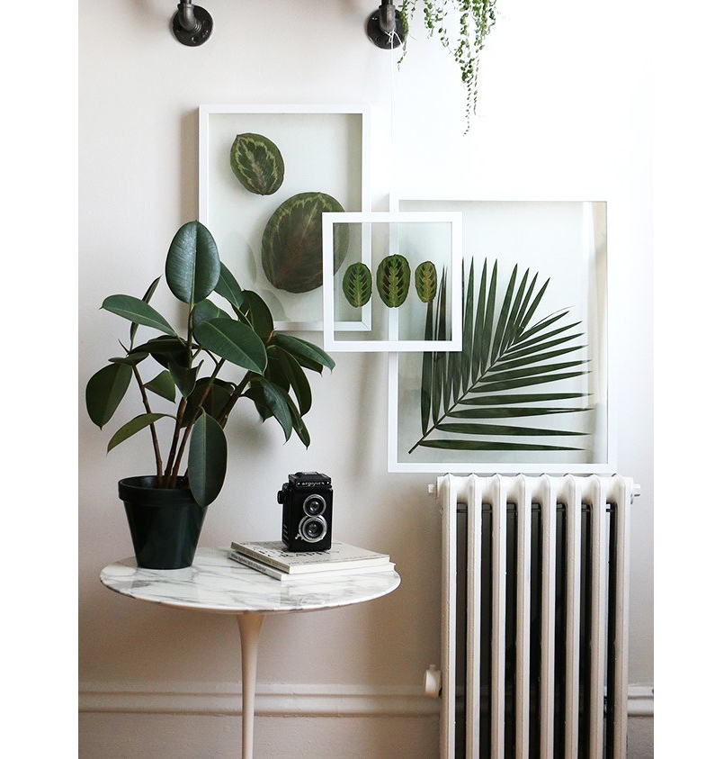 Montagem-das-plantas-em-arranjo-de-parede-Alana-Jones-Mann