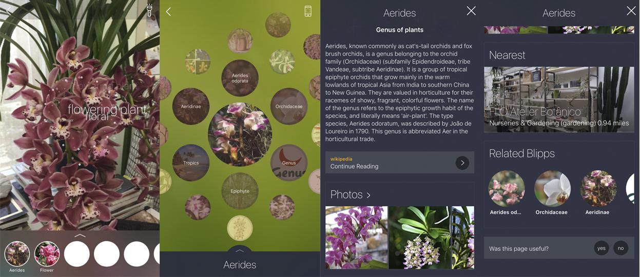 montagem-app-identifica-flores-celular