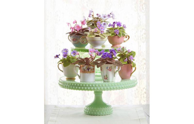 violetas-em-suporte-para-bolo-midwest-living