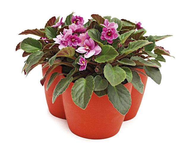 01b-plantas-dentro-de-casa-que-especies-usar